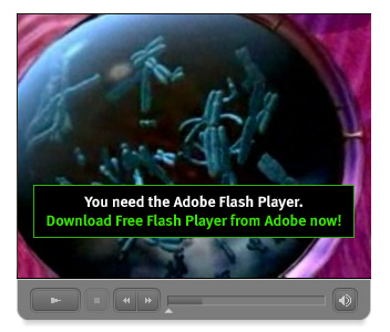 Download Free Flash Player from Adobe now!